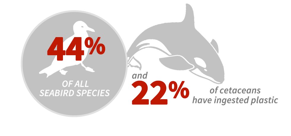 44% of all seabird species and 22% of cetaceans have ingested plastic.